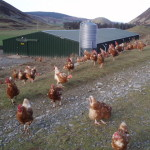 What Are Free Range Farms, Really?
