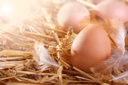 The Temptation of Raising Chickens for Eggs