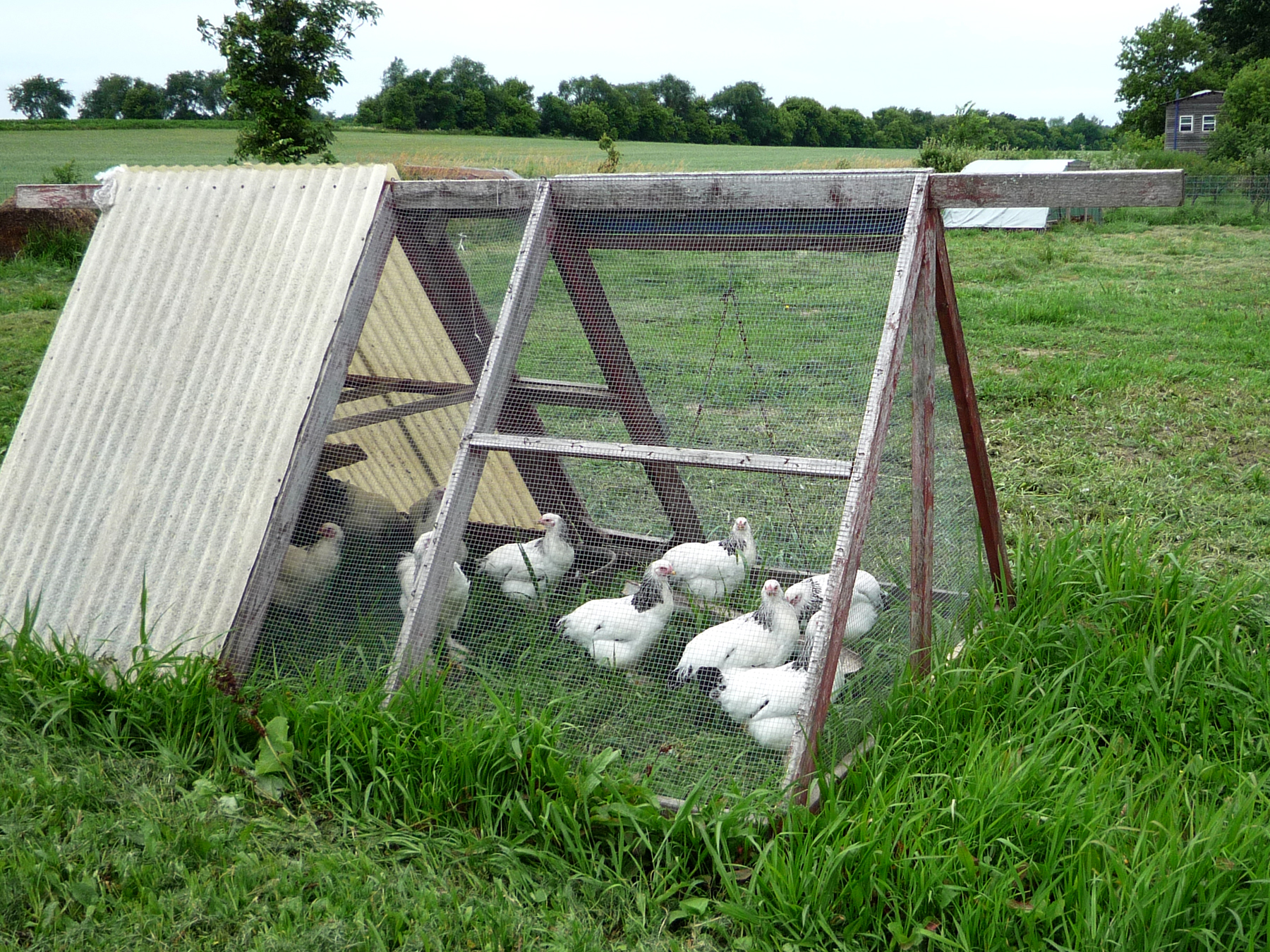 The 7 Steps to Choosing the Perfect Chicken Tractor