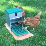 Review of Chicken Treadle Feeders