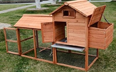 Best Chicken Coop Reviews
