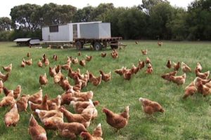 PROOF eggs are the best from Pasture Chickens